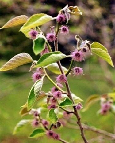 fiori femminili gelso da carta