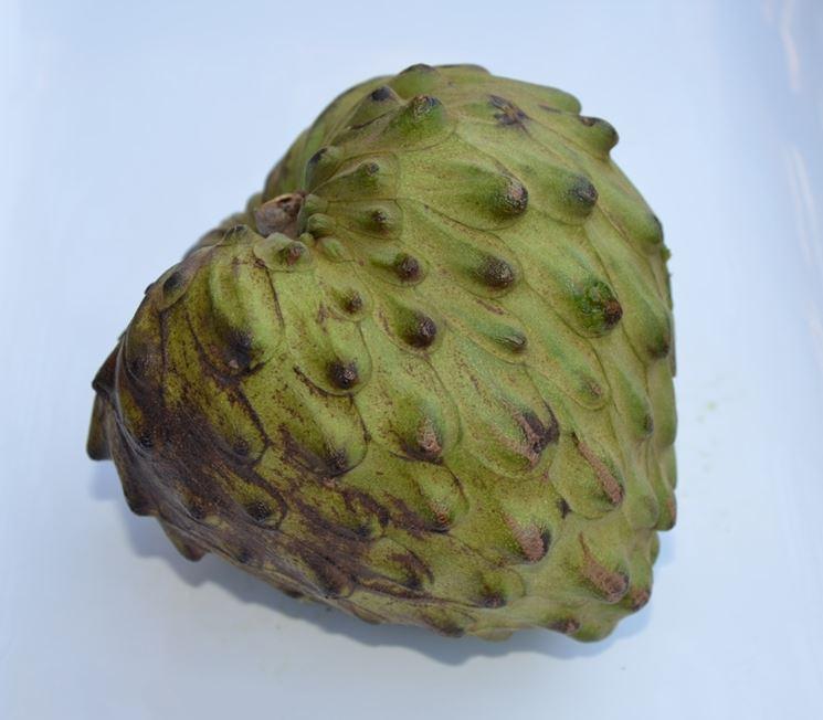 frutto annona