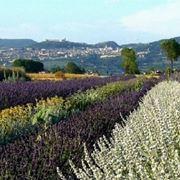 Panoramica piante aromatiche