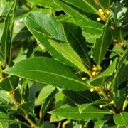piante aromatiche elenco