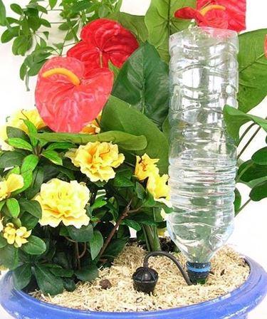 Immagine di impianto a goccia domestico con bottiglia
