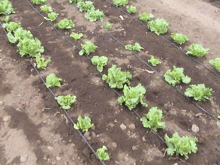 Irrigazione a goccia per orto termosifoni in ghisa for Sistemi di irrigazione giardino