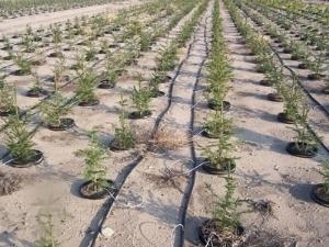 Impianto irrigazione a goccia impianto irrigazione for Valvole irrigazione giardino