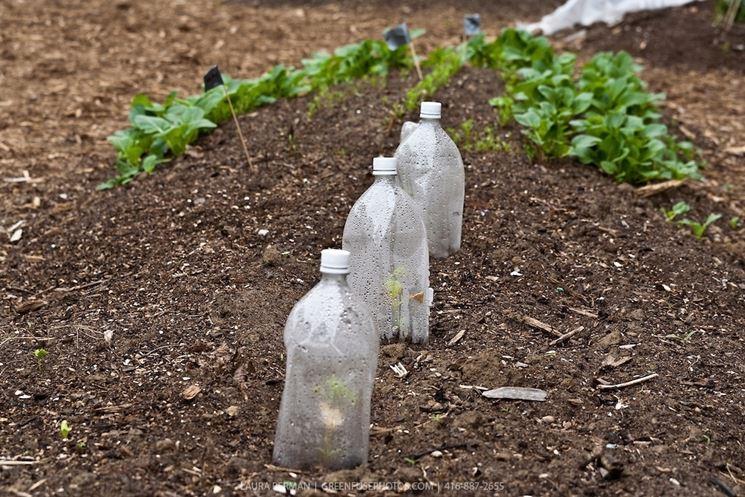 Un tipico impianto di irrigazione fai da te con bottiglie