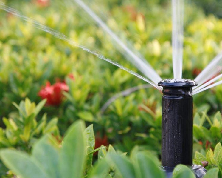 La torretta di un irrigatore interrato.