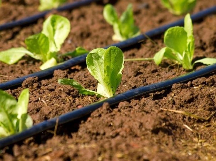 Irrigazione a goccio orto impianto irrigazione for Sistemi di irrigazione giardino