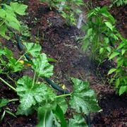 impianto irrigazione orto