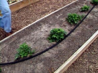 Esempio di impianto di irrigazione a goccia