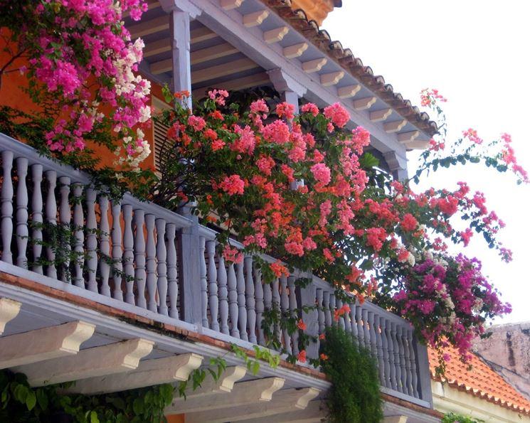 pergolato per la copertura di balconi fioriti