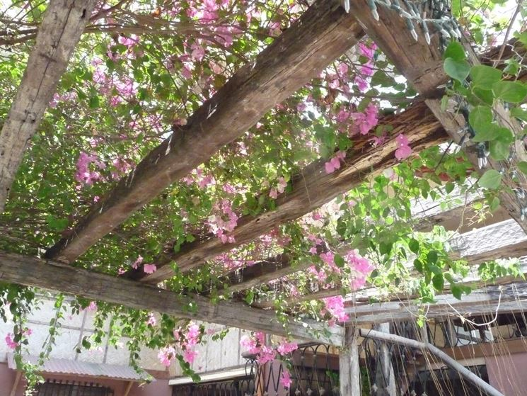 Costruire un pergolato pergole e tettoie da giardino for Arco per rampicanti fai da te