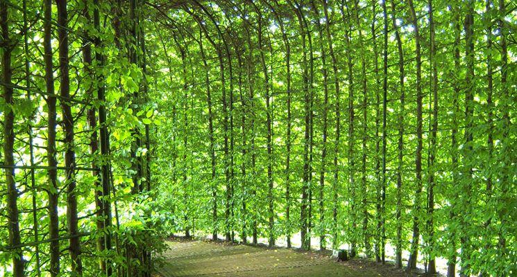 Pergolato circolare piante rampicanti
