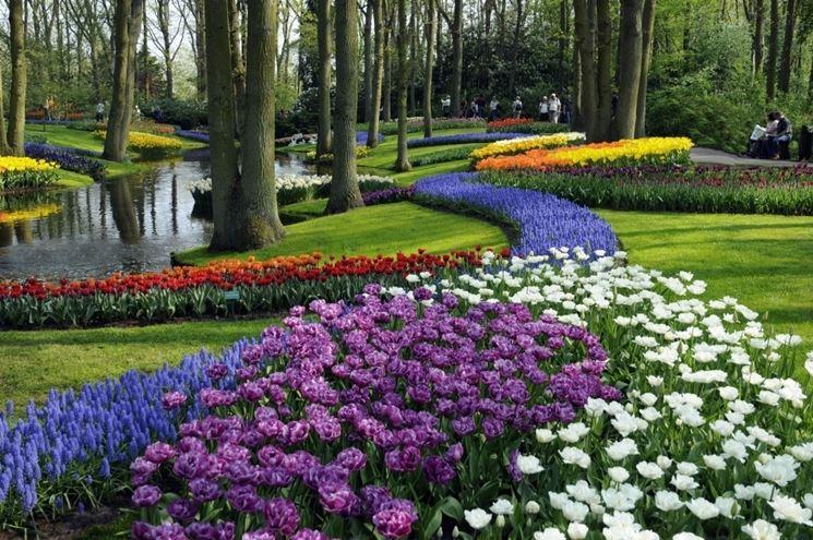 Fiori per aiuole da giardini