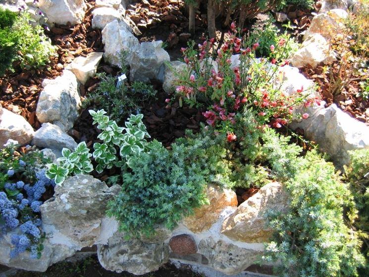 Giardini da realizzare progettazione giardini - Giardino roccioso piante ...