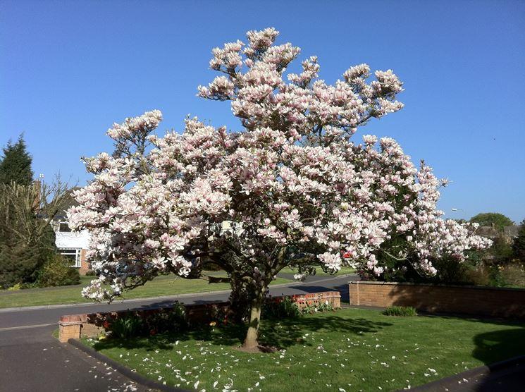 Alberi, piante e fiori per rendere più bello il giardino di casa
