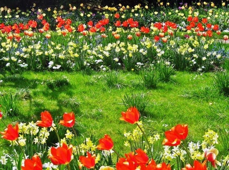 Fiori di campo in giardino