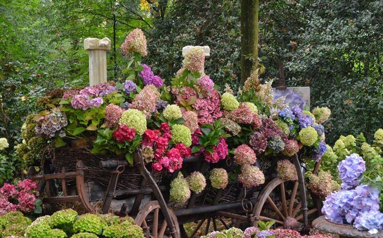 Giardini fioriti progettazione giardini fiori in giardino for Cespugli fioriti da giardino