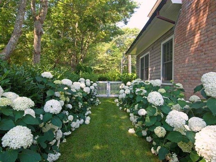 Giardino inglese monocolore