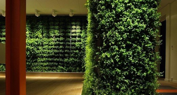 giardino interno siepi