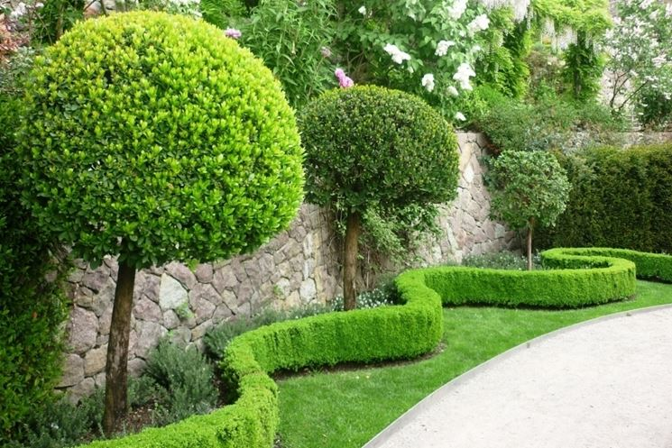giardino alberi tondeggianti