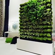 giardino verticale in casa