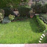 Piccolo giardino con arbusti