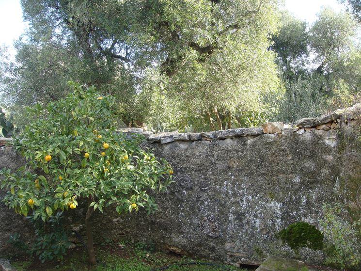 Piccolo giardino con albero di limone