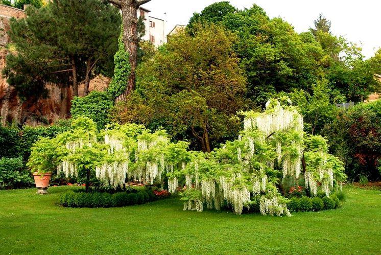 Progetti giardini privati progettazione giardini - Piccoli alberi da giardino ...