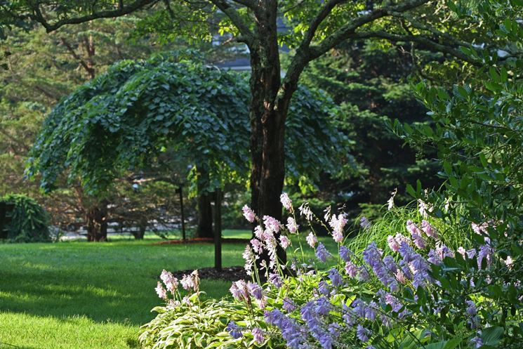 Vegetazione rigogliosa in giardino