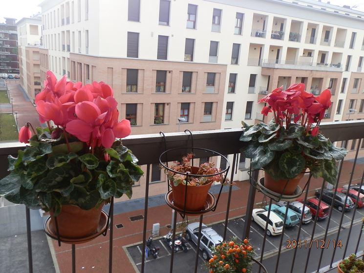 Fioriere terrazzo vasi e fioriere fioriere per il terrazzo for Sempreverdi da balcone