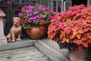 Vasi da balcone vasi e fioriere for Vasi da ringhiera