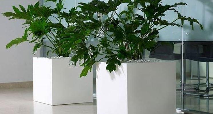 Ultimi modelli di vasi