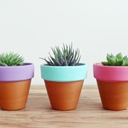 Vasi in terracotta vasi e fioriere for Vasi terracotta prezzi