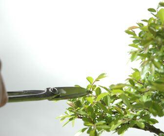 Attrezzi e vasi per bonsai