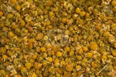 semi camomilla