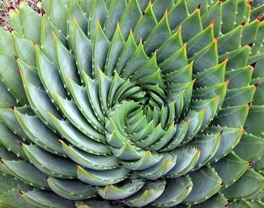 Aloe proprietà