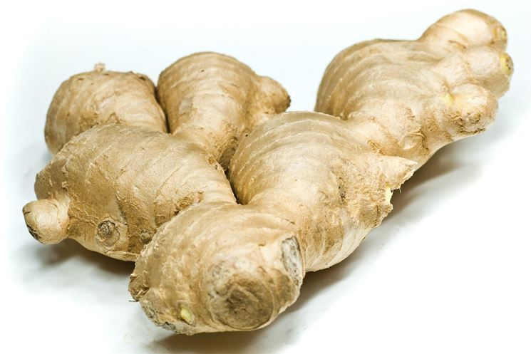 http://www.sheknows.com/home-and-gardening/articles/998183/growing-ginger