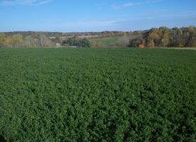 Giardinaggio for Sundaville coltivazione
