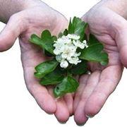 Vendita fiori di Bach