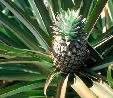 primo piano ananas