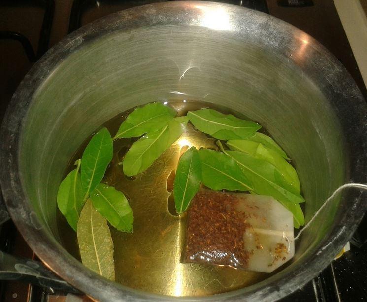 Il consumo di foglie di alloro si sta diffondendo come rimedio fitoterapico