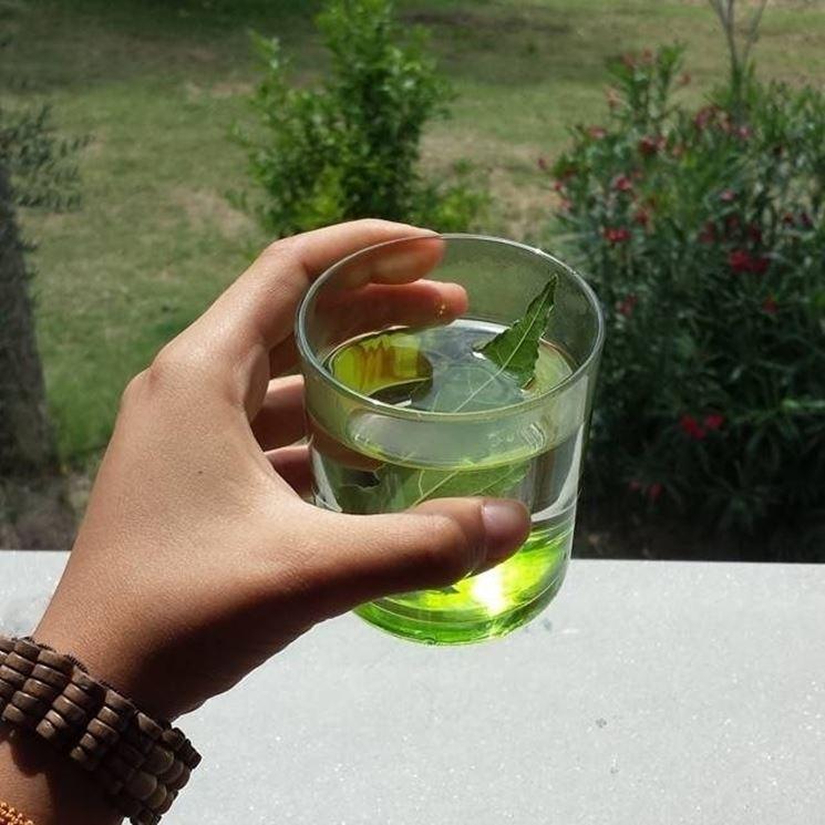 Dolori e gonfiori addominali possono essere trattati con foglie di alloro