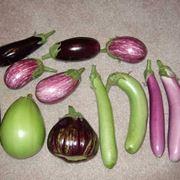 varie specie di melanzana
