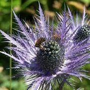 I caratteristici fiori della Regina delle Alpi