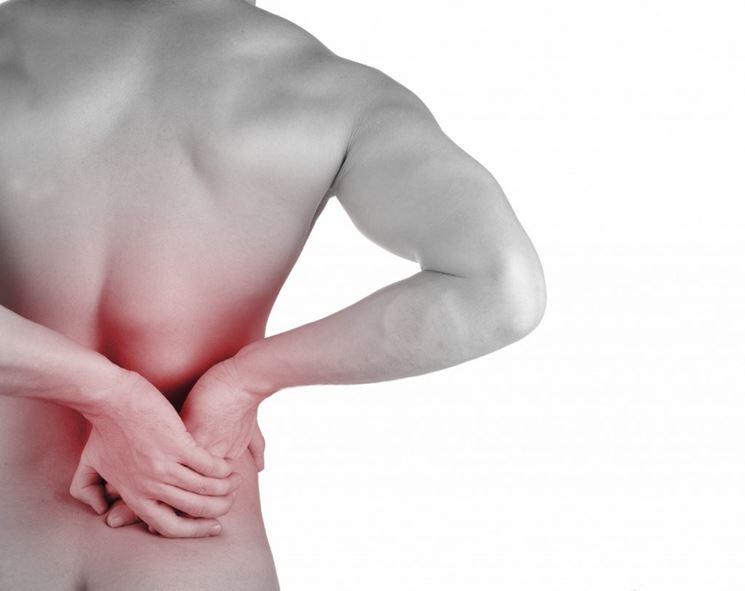 spirea <strong>ulmaria</strong> contro il mal di schiena