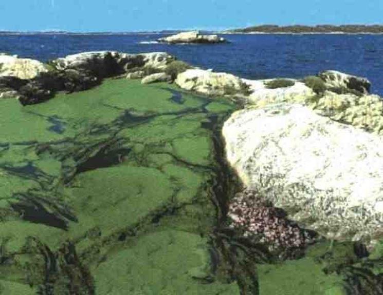 La spirulina nel suo ambiente naturale
