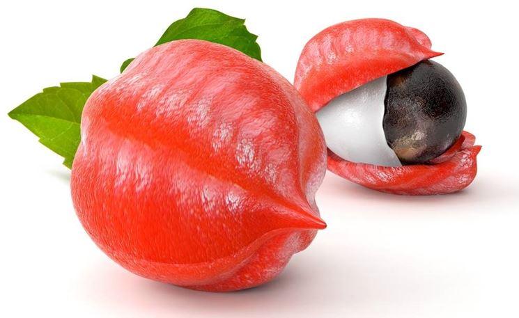 Frutto di guaranà