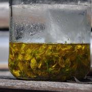 preparazione olio iperico