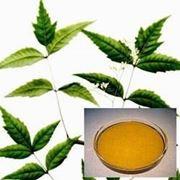 olio di neem e foglie