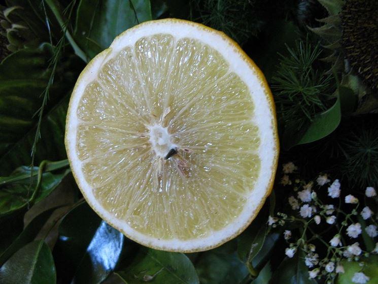 Frutto di Bergamotto in sezione