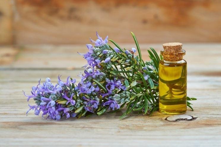 rametto di rosmarino e olio essenziale in boccetta